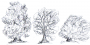 graphics_list_trees.png
